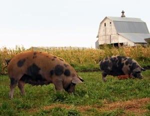 Willis Farm