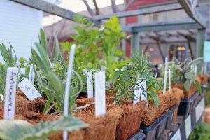 seedlings 2