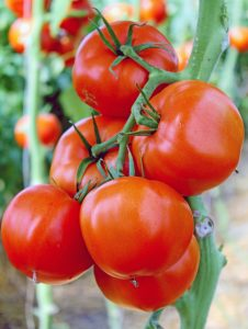 tomatoes for poster