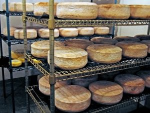 Aging Cheeses 8.25 X 11