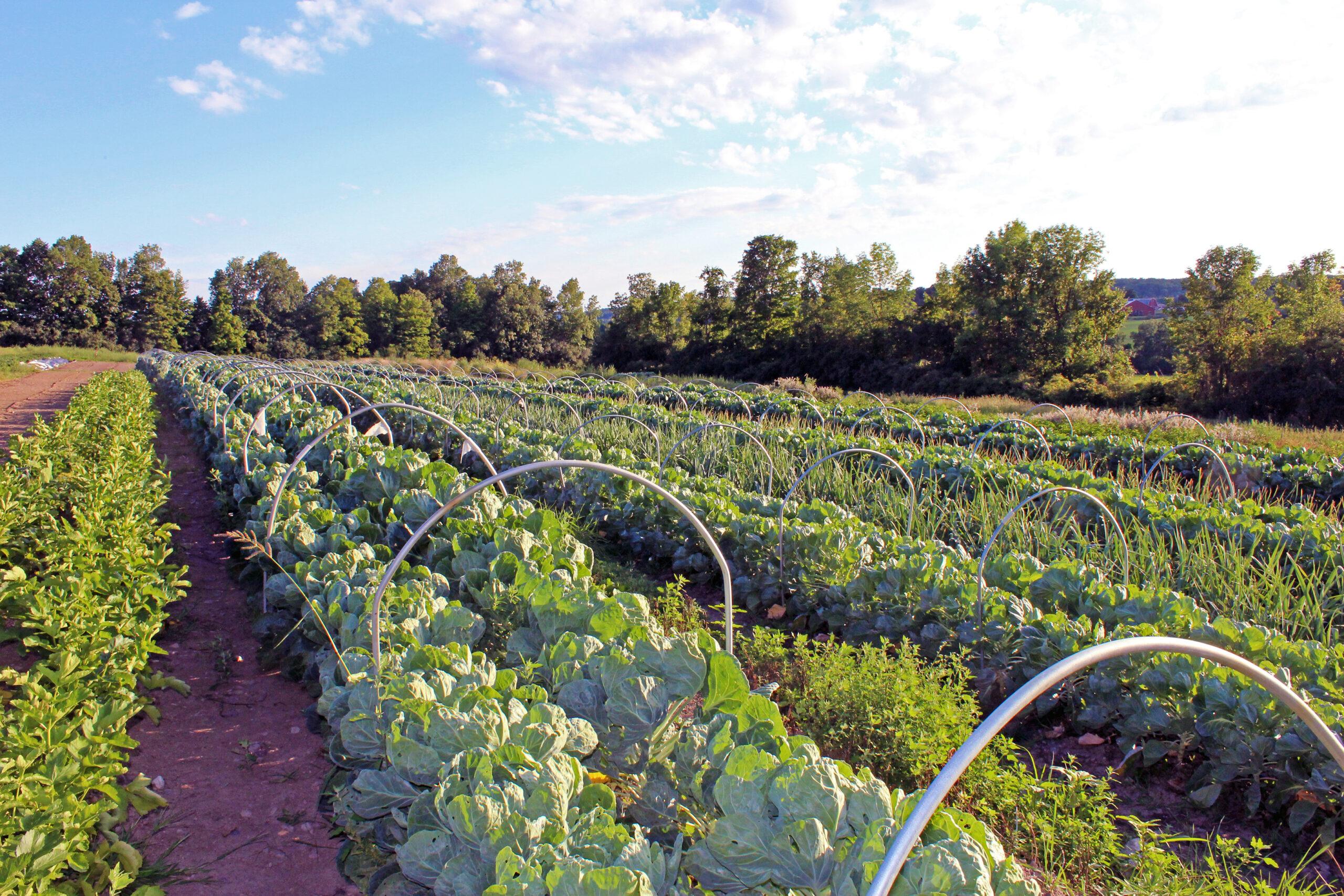 beautiful-fields-of-produce-2