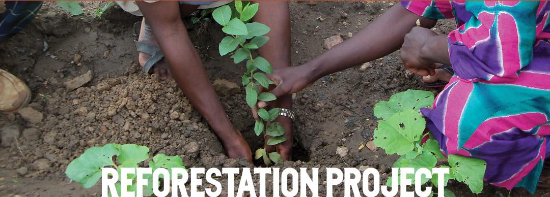 banner-reforestation