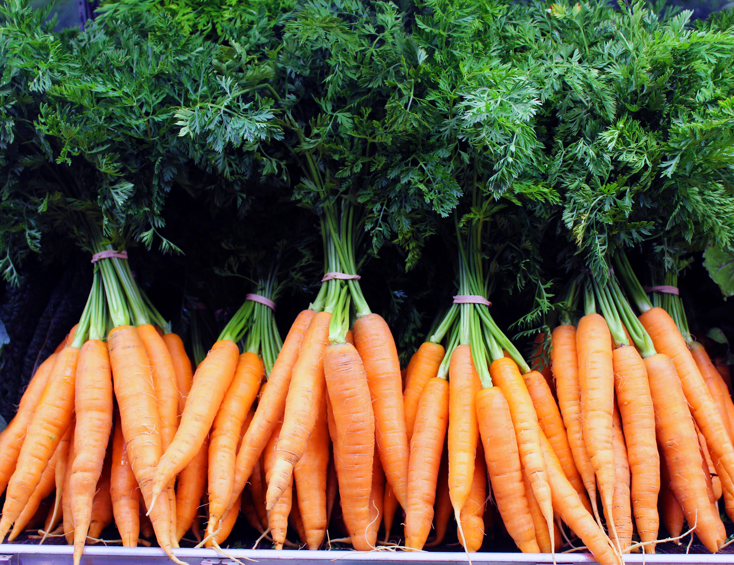 carrots-in-store-7-18-15