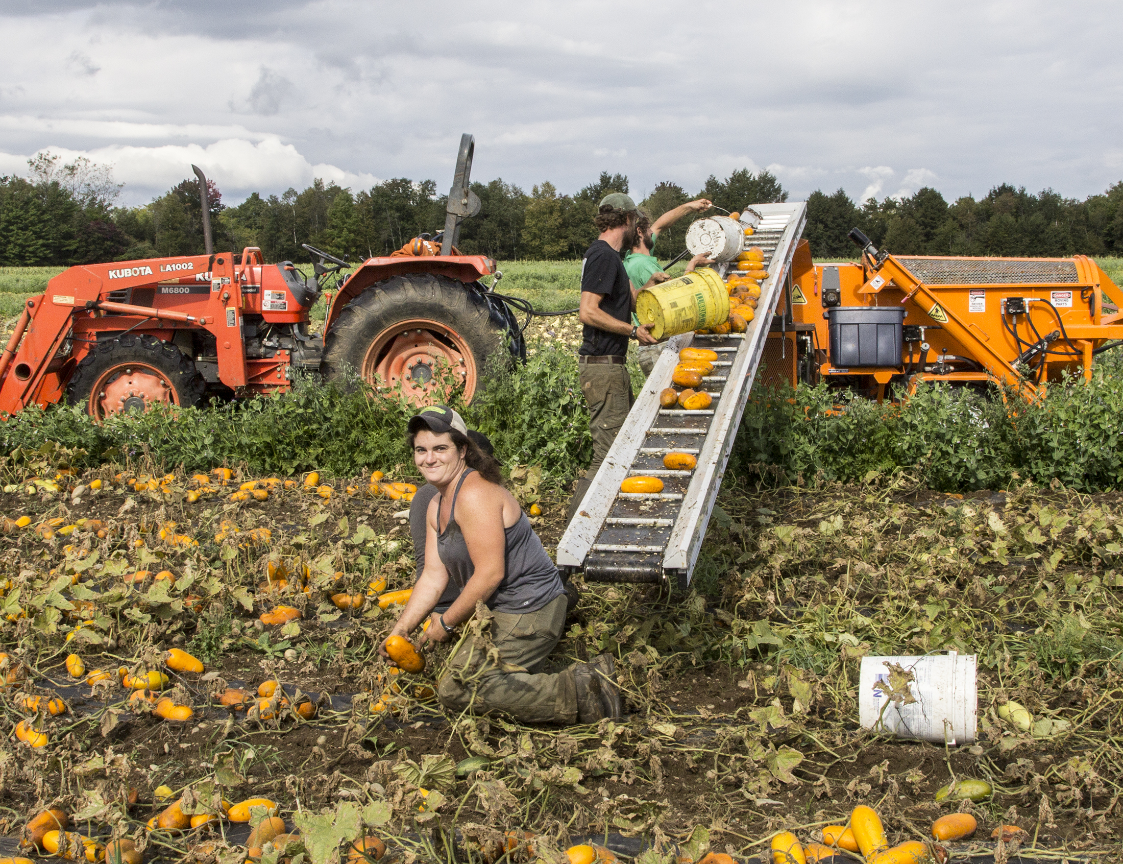 Spotlight on High Mowing Organic Seeds - Middlebury Food Co-op